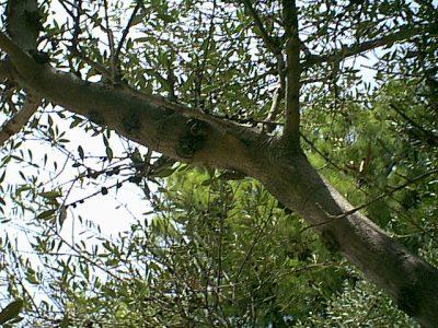 Taormina - 1999-08-07-125503