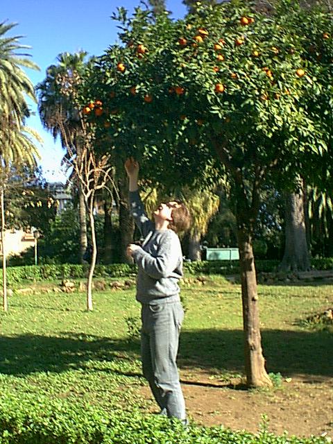 Palermo - 2000-12-24-125342