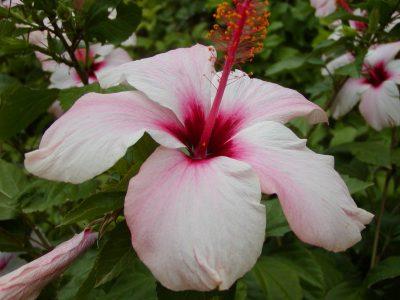 Garden - 2001-09-22-141315