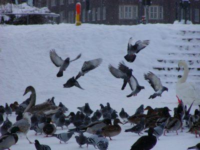 Christianshavns Vold - 2001-12-31-130945