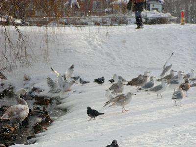 Christianshavns Vold - 2001-12-31-131457