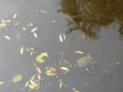 Botanic Garden - 2002-07-30-141445