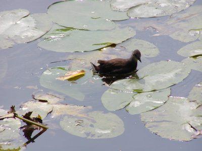 Botanic Garden - 2002-07-30-141509