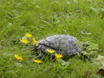 Botanic Garden - 2002-07-30-142216