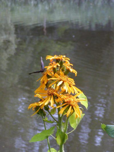 Botanic Garden - 2002-07-30-142536