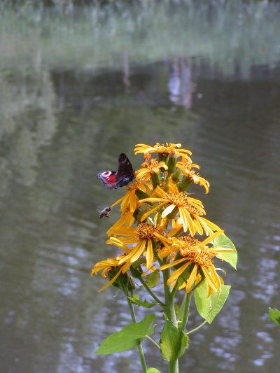 Botanic Garden - 2002-07-30-142543