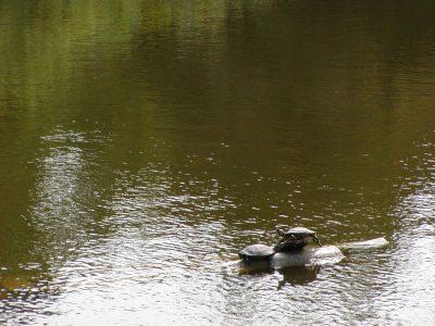 Botanic Garden - 2002-07-30-142816