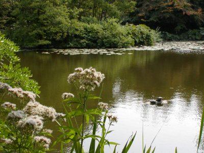 Botanic Garden - 2002-07-30-142826