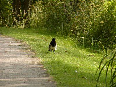 Botanic Garden - 2002-07-30-143722