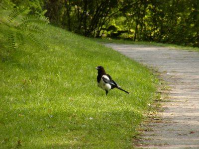 Botanic Garden - 2002-07-30-143742