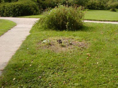 Botanic Garden - 2002-07-30-144325