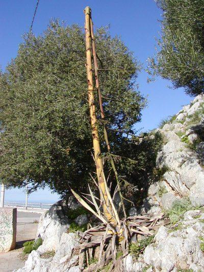 Monte Pellegrino - 2003-12-18-142211