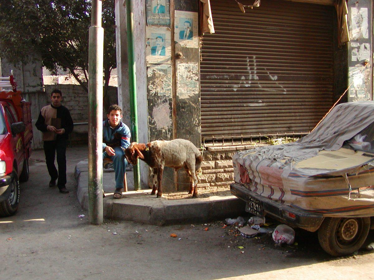 Cairo - 2004-01-19-141541