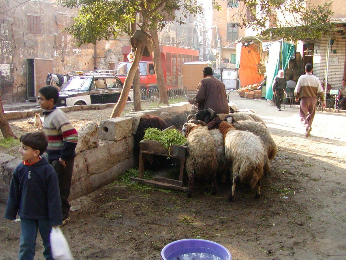 Cairo - 2004-01-19-141819