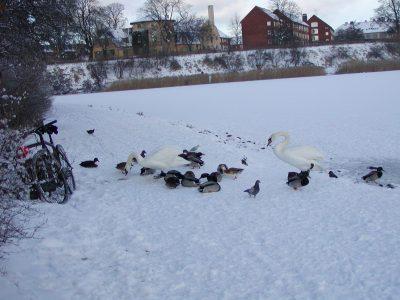 Christianshavns Vold - 2004-01-29-122606